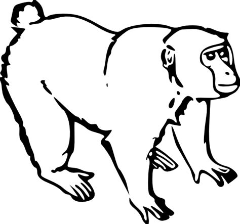Outline Of A Monkey by Monkey Clip At Clker Vector Clip Royalty Free Domain