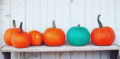 significance of pumpkin in icydk here s the meaning teal pumpkins slice ca