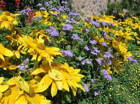 low maintenance flower garden back to basics low maintenance flower garden care