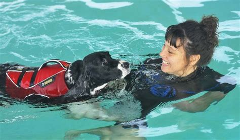 water therapy for dogs pin by fauquier times on fauquier local business