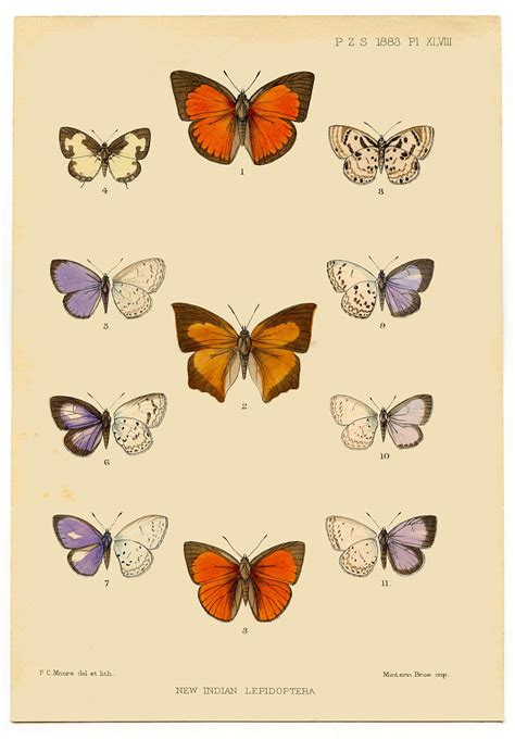 Instan Butterfly instant printable antique butterfly the graphics