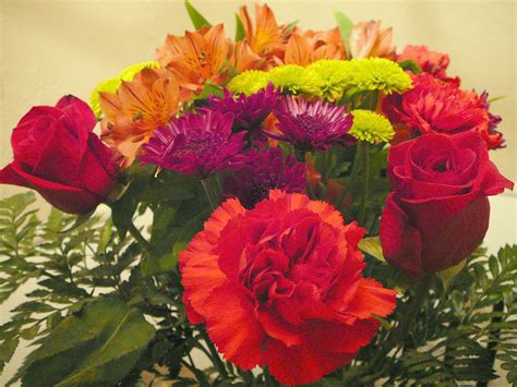 facts about carnations interesting facts about carnations flower pressflower press