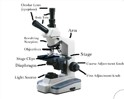 what is a light microscope used for tate microscopy microscope basics