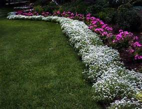 25 best ideas about border plants on pinterest flower bed edging driveway landscaping and
