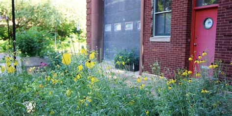 growing with plants garden bench round up think spring native plants for a healthier chicago moss architecture