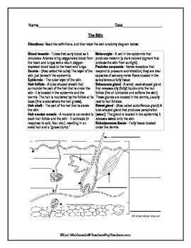 Integumentary System Worksheet Answers by Integumentary System Skin Diagram To Label By Lori