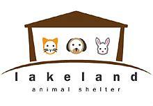 golden retriever rescue milwaukee animal rescue groups the bark market