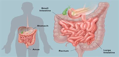 Detox Poision Out Of by 56 Best Images About Cleanse On Health