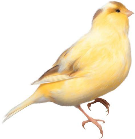 imagenes recortadas sin fondo fotos de aves pajaros sin fondo imagenes