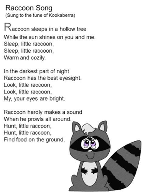 Raccoon Song