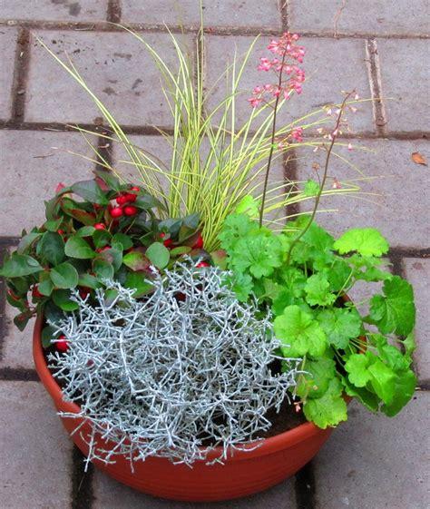pflanzen versand pflanzen set f 252 r 40 cm balkonkasten schale k 252 bel