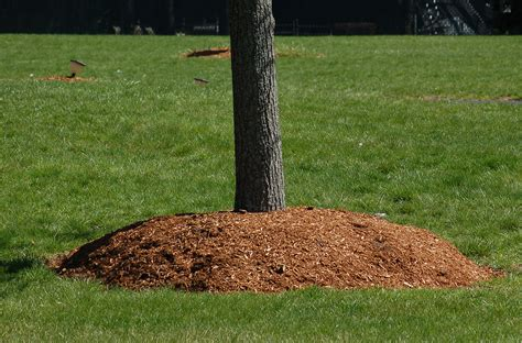 should i be using mulch around trees