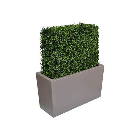 siepe da vaso vasi per siepi prezzi piante da siepe in vaso siepi