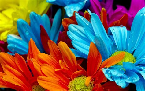colorful wallpapers of flowers colorful flowers backgrounds wallpaper cave
