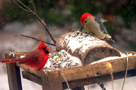 nebraska bird feeder birds what s in your backyard