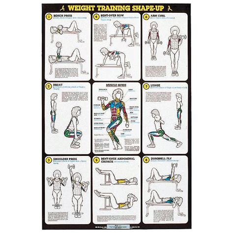 weight bench exercises poster self instruction weight training poster weight