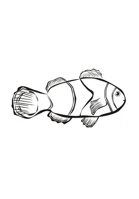 Clownfish Coloring Page Animals Town Animals Color Clown Fish Coloring Pages