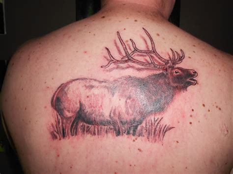 elk tattoos designs pin elk tattoos on