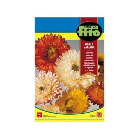 la semilla inmortal 8433905481 semilla de flor de papel