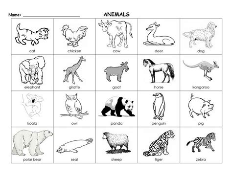 printable flash cards of animals 6 best images of black and white printable baby cards