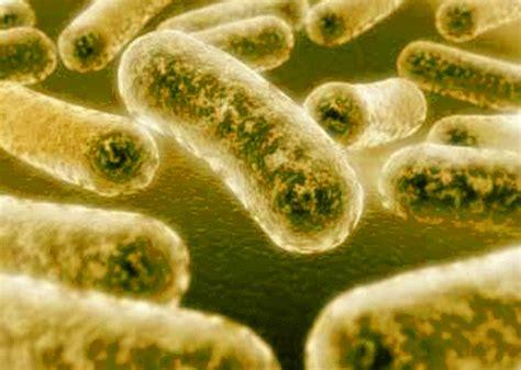 fotos de gonorrea imagenes de pacientes con gonorrea par 225 sitos hongos y bacterias blog sobre par 225 sitos