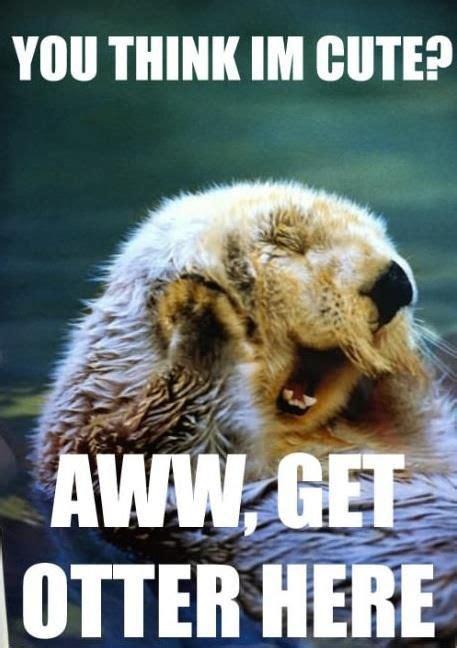 Funny Otter Memes - otter meme i lol d pinterest