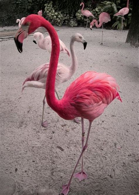 pink flamingos pink flamingo up to an 8x10 fine art photographic by maegirl1983 30 00 birds pinterest