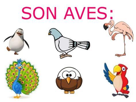 imagenes de animales vertebrados aves animales vertebrados