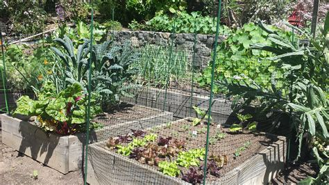 Creative Vegetable Gardens Creative Vegetable Garden Ideas Goodmotherdiet