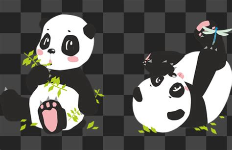 panda  hewan  dikenal lucu  imut dunia