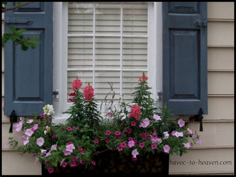 shutters and window boxes charleston window boxes havoc to heaven