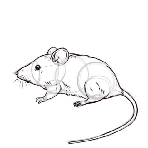 Step Outline by 3 Ways To Draw A Mouse Wikihow