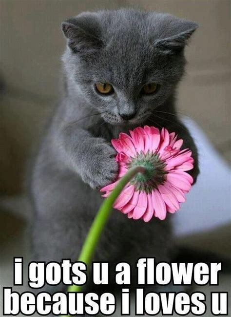 Flower Meme - funny memes cute kitten loves you with flower super