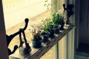 Growing Herbs In Kitchen Window Diy 20 Ideas Of Window Herb Garden For Your Kitchen