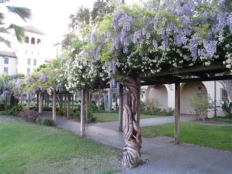 Pacific Gardens Santa Clara by 134 Best Images About California Missions On