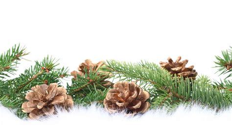 fir garland wallpapers and images wallpapers pictures