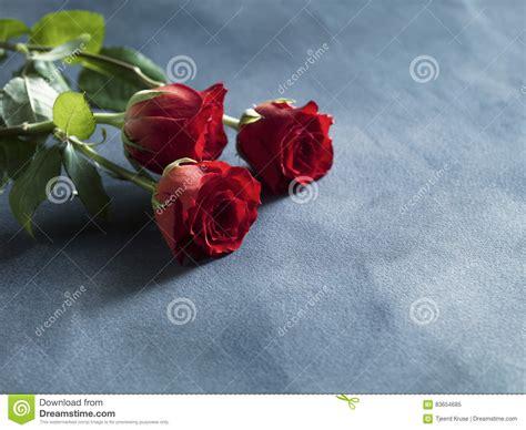 imagenes de rosas rojas frescas rosas rojas frescas rojas decorativas en fondo del