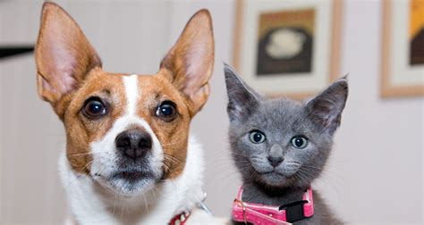 aspca dogs for adoption dogs available for adoption kauai humane society