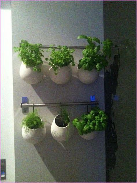 images  indoor herb garden  pinterest