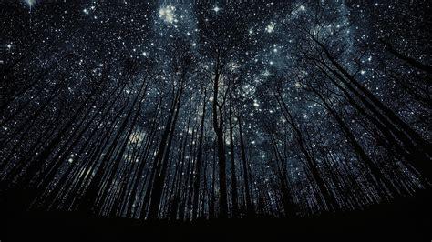 dark view wallpaper sky outside trees nature cosmos dark forest star light