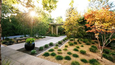 top  trees  small spaces sunset magazine sunset