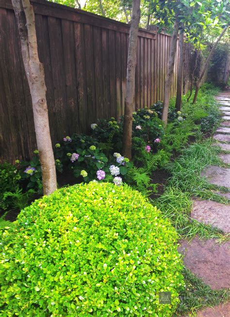 shade hydrangea landscape ideas best solutions for shade
