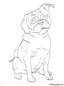 coloring pictures of breeds animal printable template with the pug breed coloring