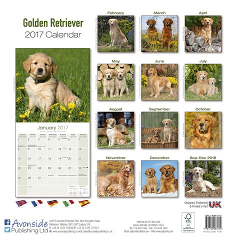 best place to buy golden retriever puppies golden retriever calendar 2017 10041 17 golden retriever breed