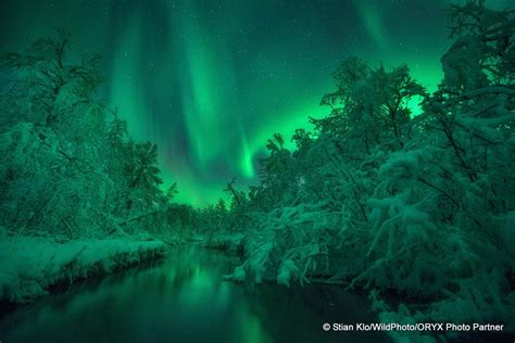 norway northern lights tour after the northern lights photo tour departs reine we will