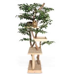 cool cat room tree ozzy izzy s dream cat room pinterest