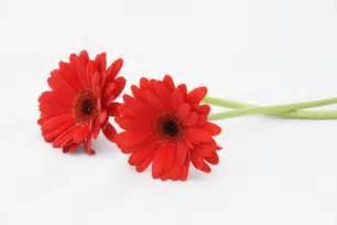 fleurs 233 es comment conserver ses fleurs 233 es
