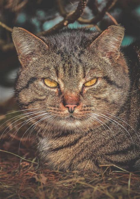 11 foto warna mata kucing ini bikin takjub dari oranye