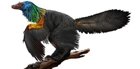 Lo Hace De Nuevo Se Enfunda En Plumas Para La Alfombra Roja Descubren En China Restos De Un Dinosaurio Con Plumas De Colores El Nuevo D 237 A