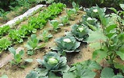 best type of manure for vegetable gardens backyard vegetable garden enjoying the bounty